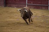stock photo of bullfighting  - Bullfight in Camarma of Esteruelas - JPG