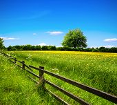 stock photo of row trees  - Spring field and blue sky - JPG