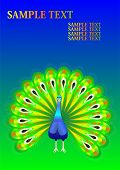image of peahen  - vector art and illustration of abstract peacock - JPG
