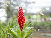 stock photo of bromeliad  - Bromeliads is a plant that has leaves and beautiful flower - JPG