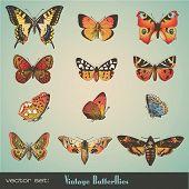 Постер, плакат: Винтажные бабочки