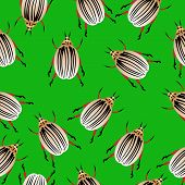image of potato bug  - Colorado potato beetles seamless pattern - JPG