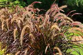 stock photo of prairie  - Long prairie grass - JPG