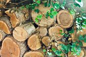 pic of loach  - stack of old woods overgrown by loach - JPG
