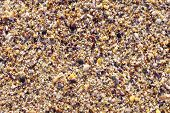 pic of snail-shell  - Mussel shells and snails on the beach closeup - JPG