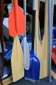 stock photo of paddling  - Wooden and plastic boat paddles - JPG