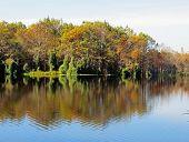 picture of mile  - Natural Landscape at Six Mile Cypress Slough Preserve Fort Myers Florida  - JPG
