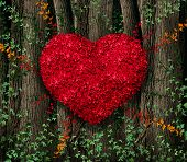 stock photo of vines  - Valentines day red leaf vine growing in a natural forest of big trees shaped in a heart shape as a happy celebration symbol for love and romance - JPG
