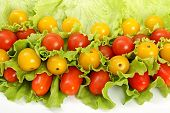 foto of greenery  - Still life from tomato and to different greenery - JPG