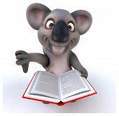 picture of koalas  - Fun koala - JPG