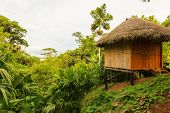 pic of jungle  - Lodge in the middle of the amazonian jungle Yasuni Wildlife Reserve - JPG