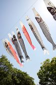 pic of flogging  - Japanese carp kite streamer decoration against blue sky - JPG