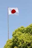 foto of japanese flag  - Japanese flag in wind against clear blue sky - JPG