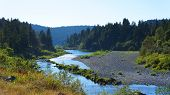 pic of sequoia-trees  - River flowing through mountains and redwood trees - JPG