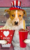 picture of uncle  - Uncle Sam doggy with popcorn and drink - JPG