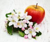 image of apple blossom  - apple and apple tree blossoms on a wooden background - JPG