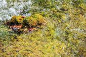 foto of green algae  - The Green algae in water and detail - JPG
