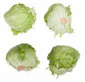 foto of iceberg lettuce  - Lettuce head isolated on white background  - JPG
