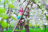 pic of apple orchard  - Little girl climbing a ladder in a fruit garden - JPG