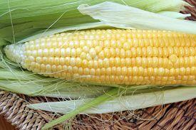 picture of sweet-corn  - Fresh corn cob. Big corn cob. Fresh yellow corn. ** Note: Visible grain at 100%, best at smaller sizes - JPG