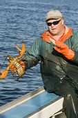 picture of lobster boat  - Fisherman and a live female lobster on a boat in the atlantic ocean - JPG
