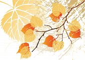 image of tree leaves  - Autumn september grunge leaves background - JPG
