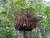 stock photo of epiphyte  - Epiphyte in the Daintree Rainforest of Australia - JPG
