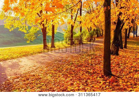 poster of Autumn landscape - yellowed trees and fallen autumn leaves in city park alley in soft morning light. Colorful autumn landscape scene. Sunny autumn morning landscape