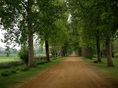 foto of rabbit hole  - Christ Church College Meadow Path - JPG