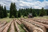 Red Tractor Pulling Tree Logs For Timber Industry. Felling Of The Forest. poster