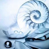 Сut Away Of A Chambered Nautilus Shell, Mother Of Pearl Shell, Popular Cephalopod. Marine Still Life poster