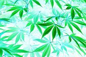 Surrealistic Abstract Hallucination Psychedelic Narcotic Marijuana Drug Intoxication State Of Mind poster