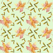Hand Drawn Seamlees Pattern Watercolor Colorful Maple Fall Leaf And Winged Seeds Maple Tree Isolated poster