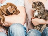 Young, Charming Puppy And Cute Cat. Close-up poster