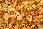 Autumn Forest. Top View Of Faded Fallen Leaves On Ground. Creative Nature Background. poster