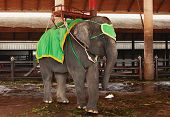 Cute Circus Small Elephant In Thailand In Asia poster