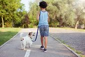 Dog And Little Child Walking At The Park Sunset. Friendship And Obedience Concept. poster