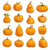 Pumpkin, Squash And Gourd Vegetable Cartoon Icons. Orange And Yellow Autumn Pumpkins With Green Leaf poster