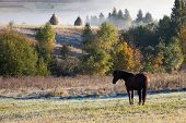 Beautiful Horses On A Pasture In Of Autumnal Colorful Mountains After Rain. Carpathian Mountains poster