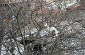Spring, Cats Flew Home. Stray Cat Sitting On Trees Branch Near House poster