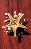 Beautiful Image With A Large Sea Star Surrounded By Many Shells. Starfish On Wood Background. Elemen poster