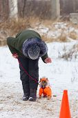 A Small Dog Obediently Performs Winter Training poster