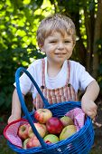 Sweet toddler boy with basket with ripe red and yellow apples