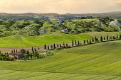 stock photo of senesi  - Farmhouse and alley in near Siena - JPG