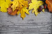 stock photo of fall day  - Autumn wooden background with maple and oak leaves and acorns - JPG