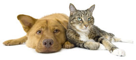 foto of cat dog  - Dog and cat together on white background - JPG