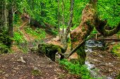 picture of trough  - thin trail in shade of green forest near the bridge trough the river - JPG