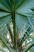 image of monocots  - A beautiful pattern of palm tree leave - JPG