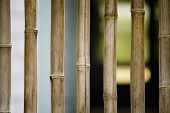 Stock Photo: Looking Through Window With Bamboo Bars poster