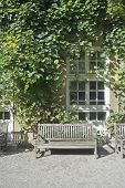 stock photo of ivy vine  - Climbing Vines of Ivy on a House with Wooden Bench - JPG